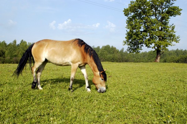 Country Horse 2118 10kg