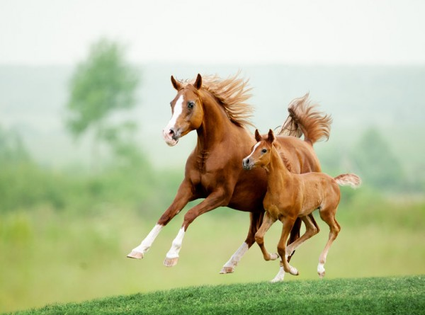 Country Horse 2120 10kg